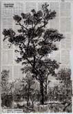 To Outlive the Tree by William Kentridge at Annandale Galleries