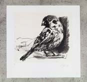 Untitled (Bird Variation I) by William Kentridge at Annandale Galleries