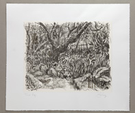 Garden below the Studio by William Kentridge at Annandale Galleries